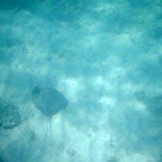 Cococay (Cruise Line's Private Island) - Stingray swimming under me