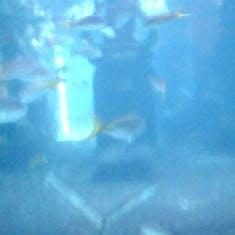 Nassau, Bahamas - Aquarium at Atlantis