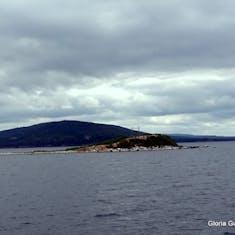 Sydney, Nova Scotia - Birds on island