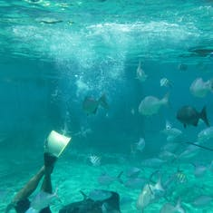 Cozumel, Mexico - Excursion - Everybody Loves Rays and Sharks!