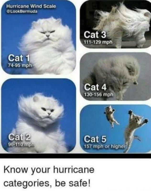 hurricane-cats-meme.jpg