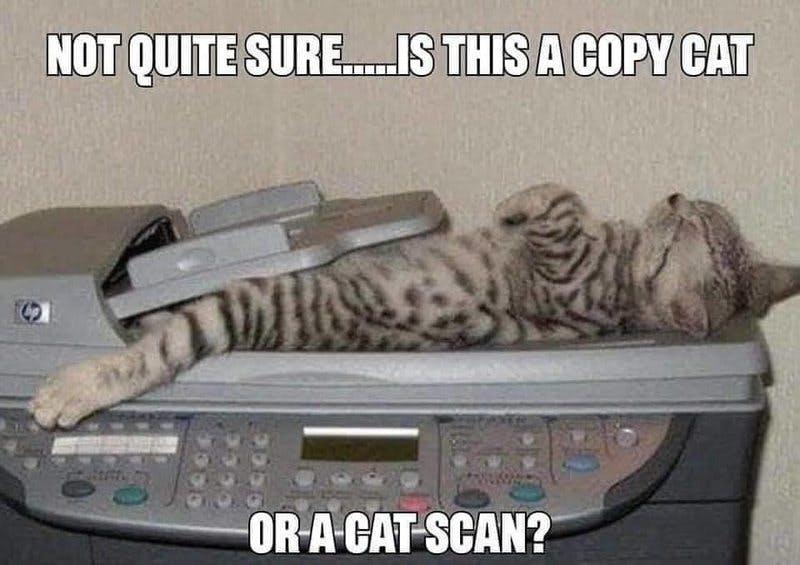 cat scan.jpg
