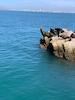Catamaran Ride- Seals