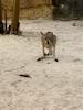 Jungle Island Kangaroos!