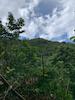 Mt Liamuiga Volcano Hike