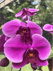 Orchid from Raymond Burr