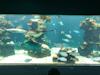 Awesome aquarium, beaches, shopping, lunch