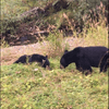 We really were this close to the bears