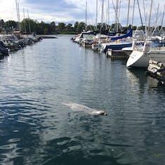 Seals in Victoria