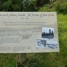 Forest of Nova Scotia