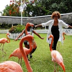 Ardastra Gardens, Nassau