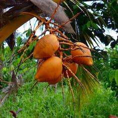 Around Am Samoa