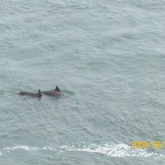 We saw dolphins next to the ship as we docked in San Juan :)