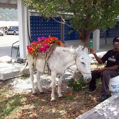 This guy called me over to sell me flowers for $1.00.