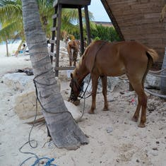 Grand Turk Island - A horse eating a coconut. No lie.
