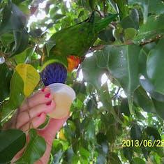 Charlotte Amalie, St. Thomas - Feeding the lorikeet at Coral World. It later pooped on me. LOL