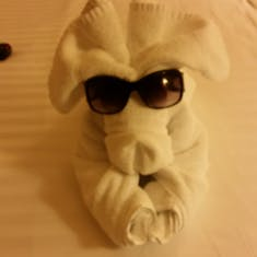 Always love the towel animals