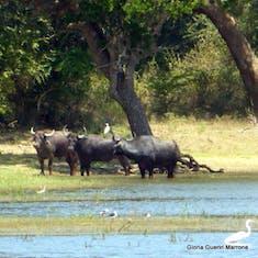 Yala National Par Hambantota, Sri Lanka