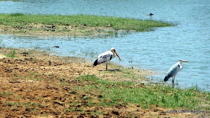 Yala National Park, Sri Lanka - Amsterdam