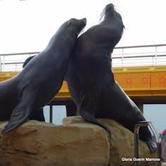 Boston, Massachusetts - Sea Lions - Lido Pool