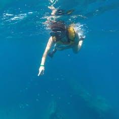 Oranjestad, Aruba - Snorkeling over a shipwreck