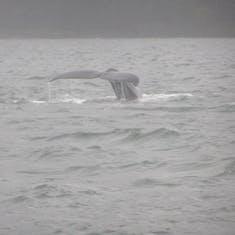 Juneau, Alaska - Whale watch
