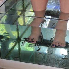 Pedicure by fish