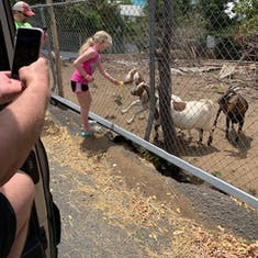 Roadside goats on amazing tour