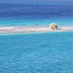 Lonely Sand Bar Shrub in Aruba