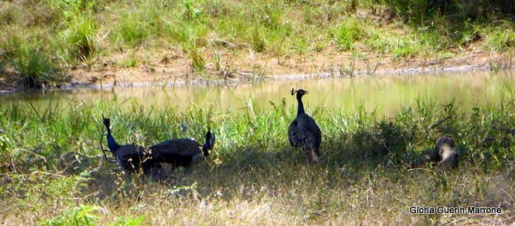 Hambantota, Sri Lanka - Small Wildlife Yala National Park, Sri Lanka