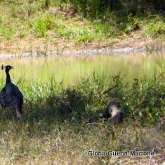 Small Wildlife Yala National Park, Sri Lanka