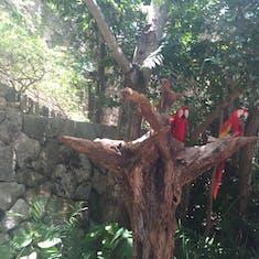 Cozumel, Mexico - Aviary at Excaret Eco Park