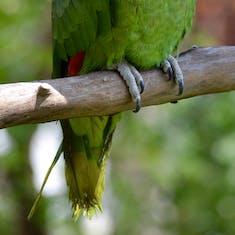A resident of El Barrital Plantation.