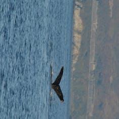 Kodiak, Alaska - Whale
