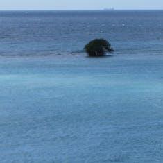 Oranjestad, Aruba - Aruba blue water with a tree growing?