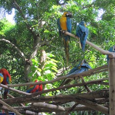 Cartagens birds