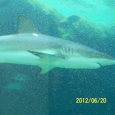 Nassau, Bahamas - The underground aquarium at Atlantis.