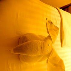 Elephant Towel Animals