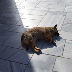 Santorini, Greece - Dog in Santorini