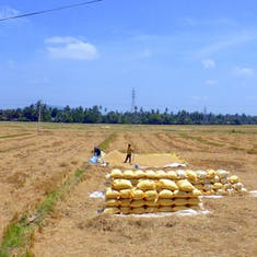 Fields of Sri Lanka