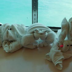 Our towel animals for the week